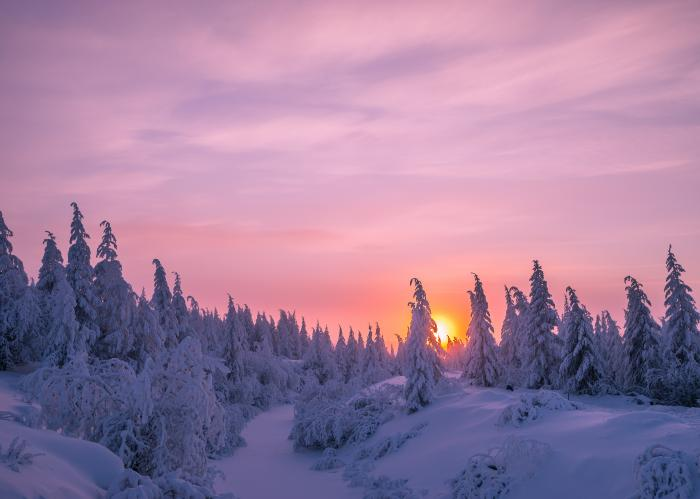 Day Trip to Lapland inc. Activities